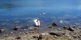 Λιμνοθάλασσα Κουτάβου