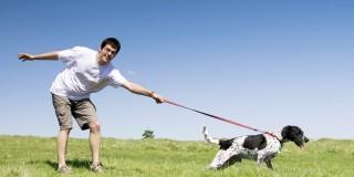 Μάθε πως θα βγάζεις τον σκύλο σου βόλτα αντί να σε βγάζει αυτός