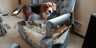 O σκύλος προκαλεί καταστροφές όταν φεύγω από το σπίτι