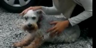 Η αλήθεια για το σκύλο που «λιποθυμά»