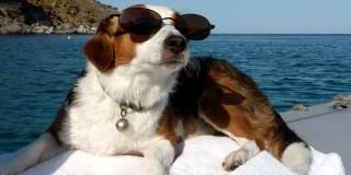 Σκύλος και διακοπές