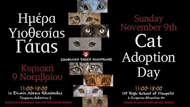 Cat Adoption Day
