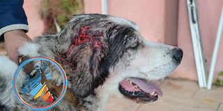 Kακοποίηση σκύλου