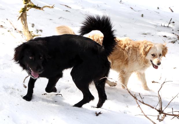 Χάθηκαν δύο σκυλιά στον Αίνο