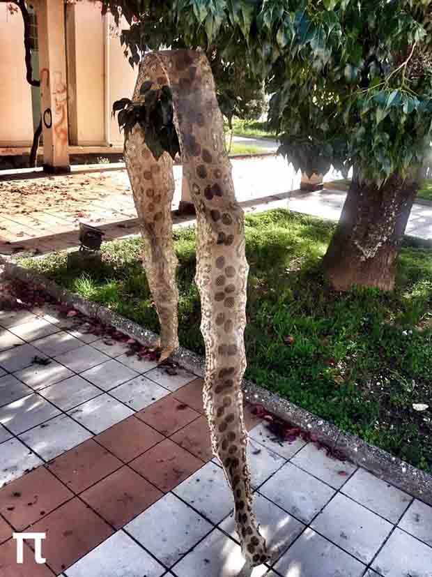 Δέρμα από φίδι 3,5 μέτρων