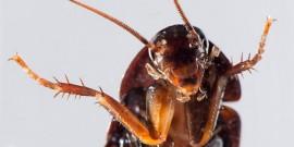 Πανέτοιμες να σκορπίσουν τρόμο και φρίκη οι κατσαρίδες της χώρας